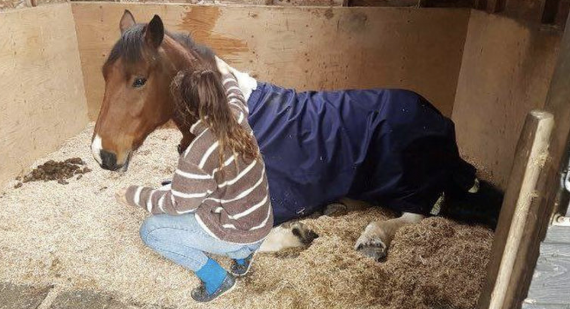 poorly horse, girl comforting horse
